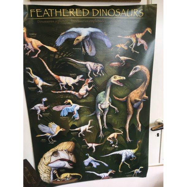 Plakat FEATHERED DINOSAURS